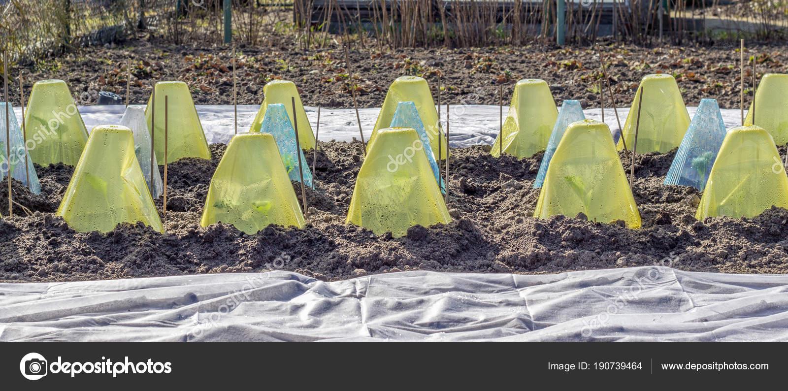 Gemüse Bett Frühjahr Mit Abdeckungen Und Garten Vlies U2014 Stockfoto