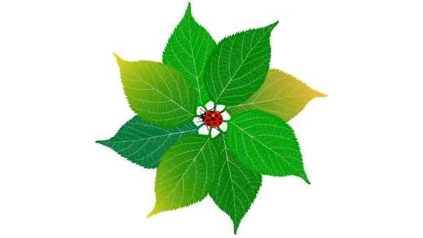 Green leaf with ladybug on white background. 60 fps. Alpha channel