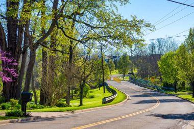 Curvy suburban road