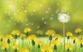 pampelišky květiny pole