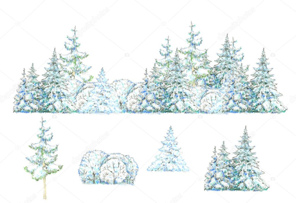 Winter forest isolated on white background