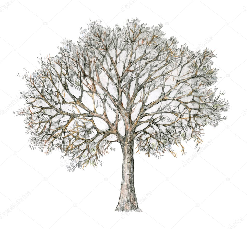Winter tree isolated on white background