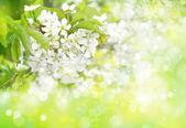 Na jaře Kvetoucí strom. Na jaře pozadí