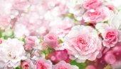 A virágzó rózsaszín rózsa virágok közelről