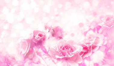 Close up of pink roses on bokeh background