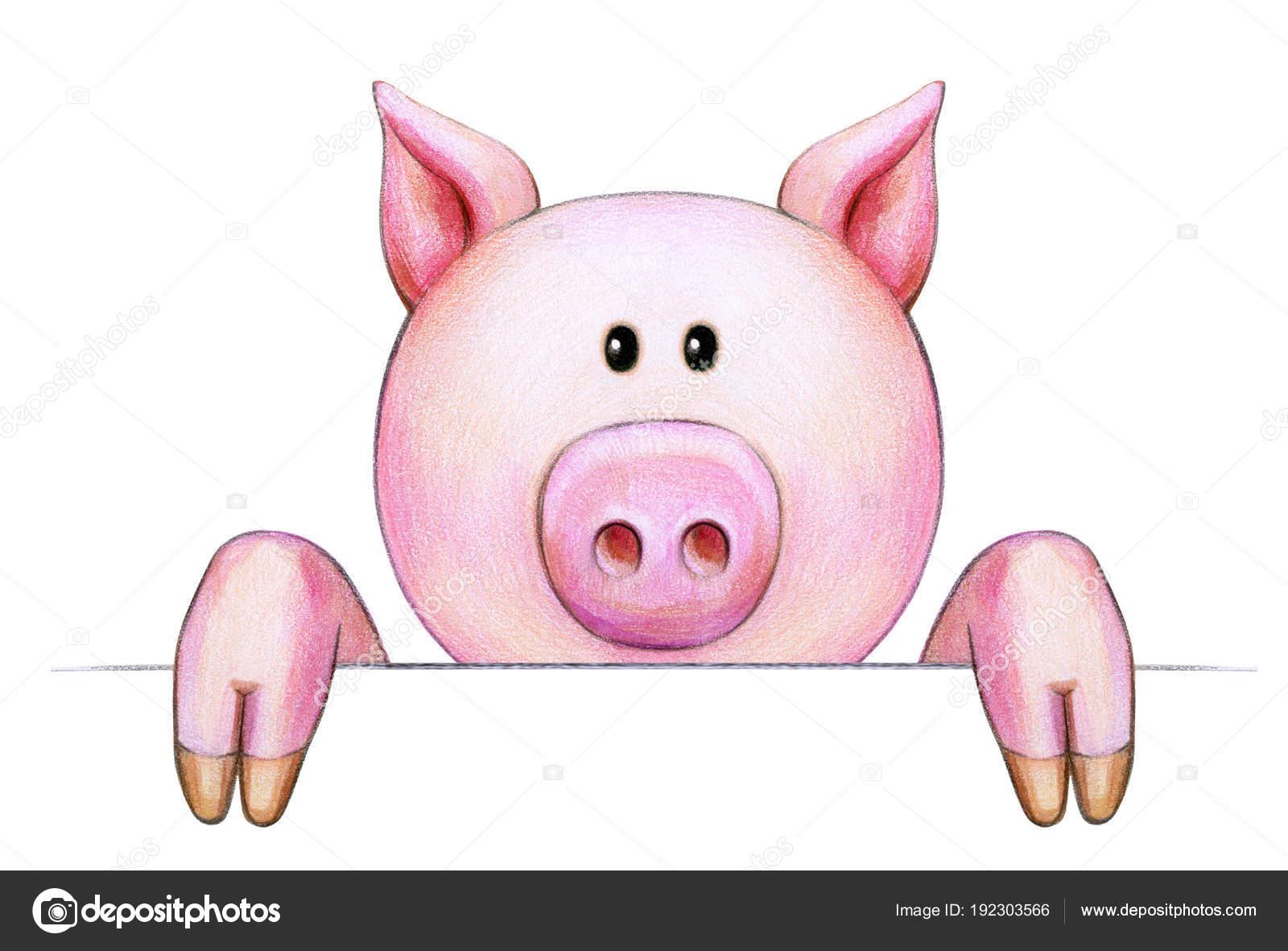 desenho porquinho isolado fundo branco fotografias de stock