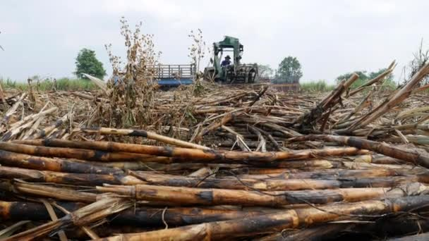 Mezőgazdasági termelő vágás cukornád területén