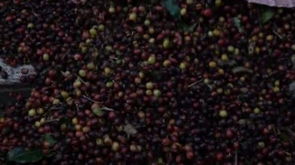 Nalévání kávy bean Zpomalený pohyb