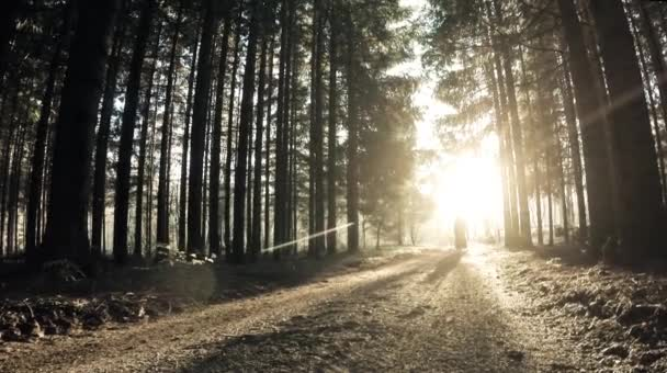 Woman in black walk through the forest. Sun shining behind trees