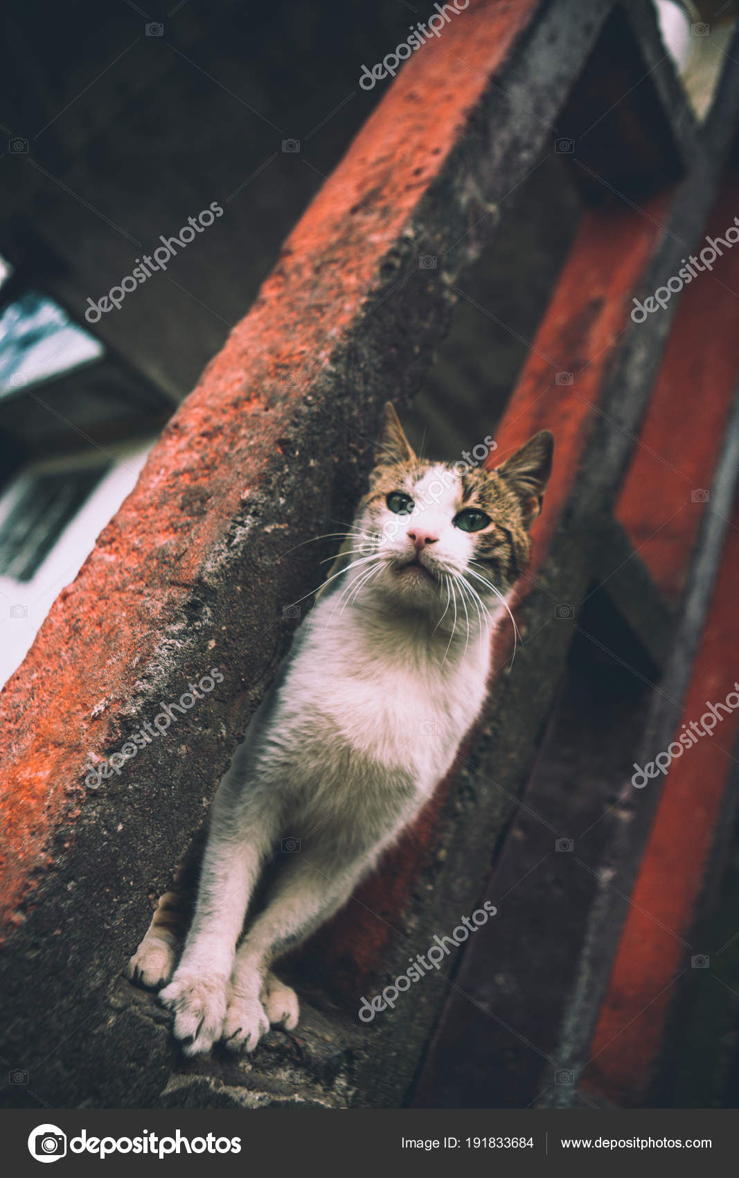 Brilliant Cat Sits Concrete Structure House Stock Photo C Style Home Interior And Landscaping Synyenasavecom