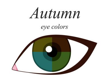 Stock vector seasonal color analysis palette for autumn type of female appearance. Eye colors for autumn type.