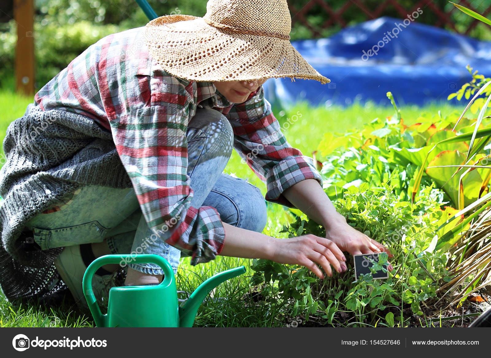 Cuidados de planta no jardim stock photo for Cuidados del jardin
