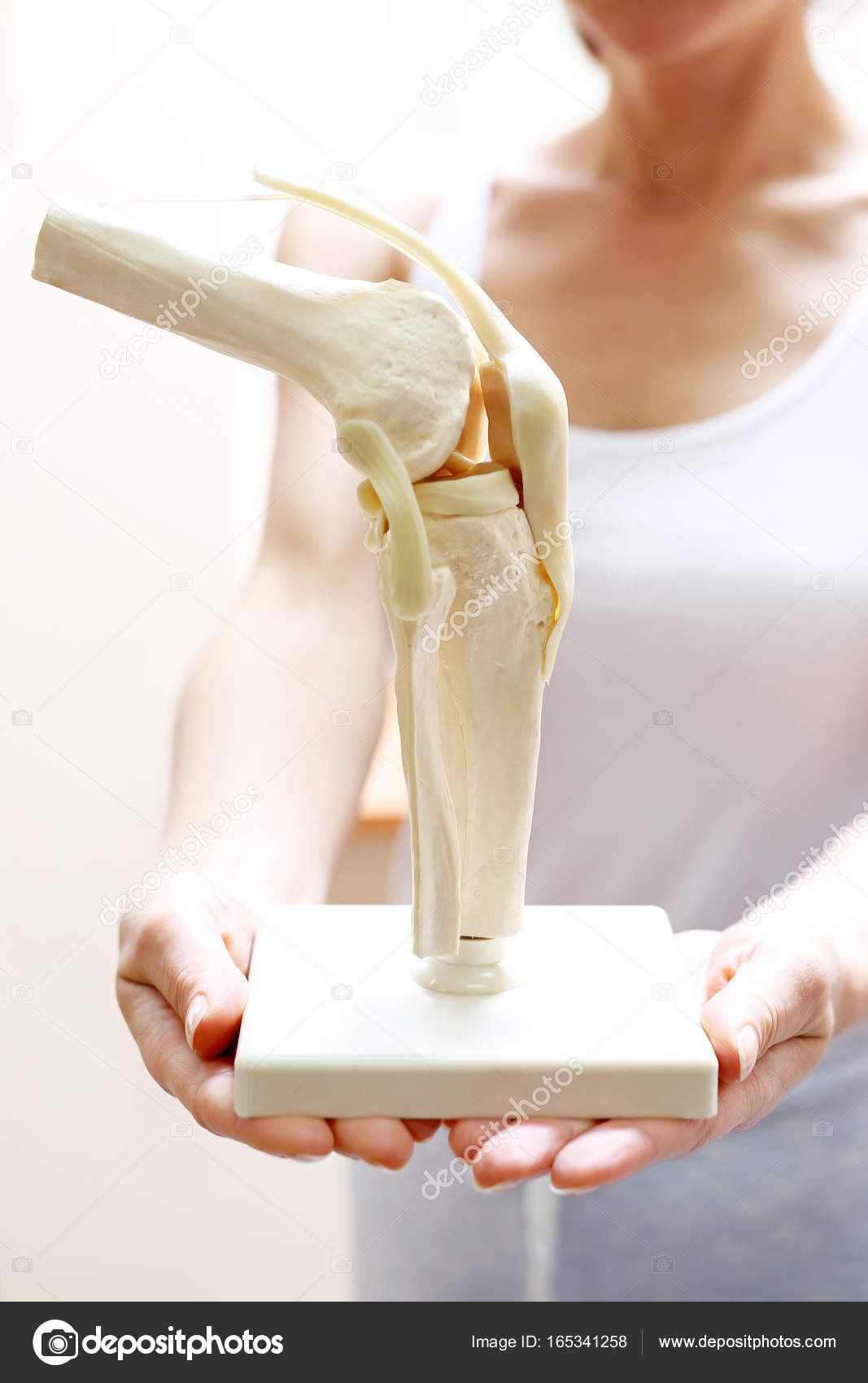 Knee anatomy model stock photo robertprzybysz 165341258 an orthopedic shows an anatomical model of the knee joint photo by robertprzybysz ccuart Image collections