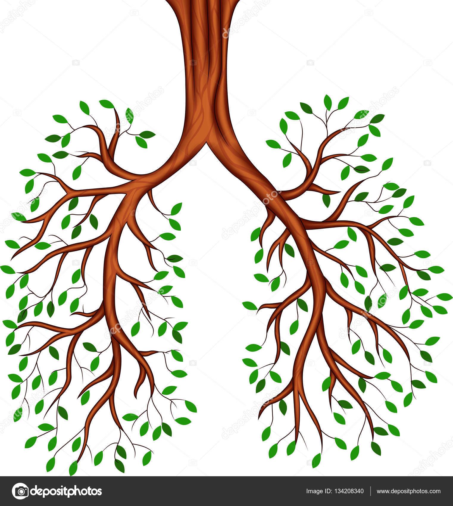 tree lungs cartoon u2014 stock vector tigatelu 134208340