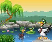 Nette Enten schwimmen auf dem Teich und Frosch