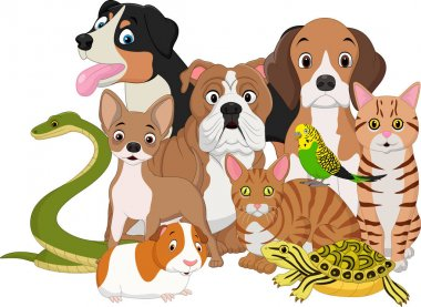 Group of pets cartoon