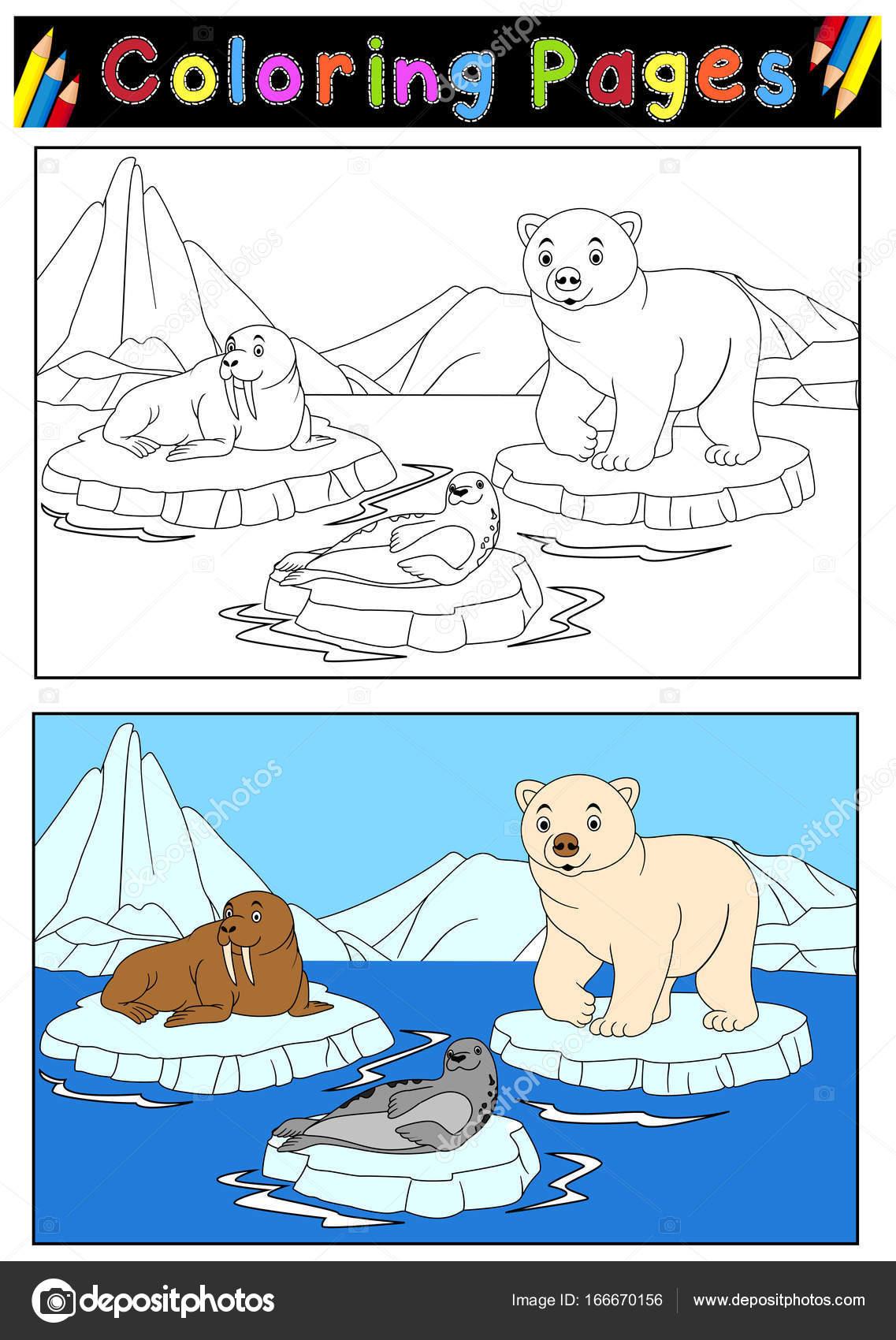 Animales árticos para colorear libro — Archivo Imágenes Vectoriales ...