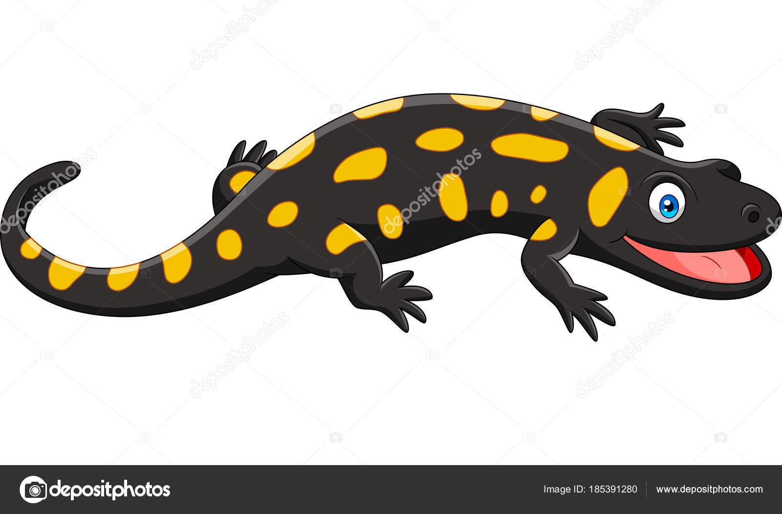 Dessin Salamandre dessin animé heureux salamandre isolé sur fond blanc — image