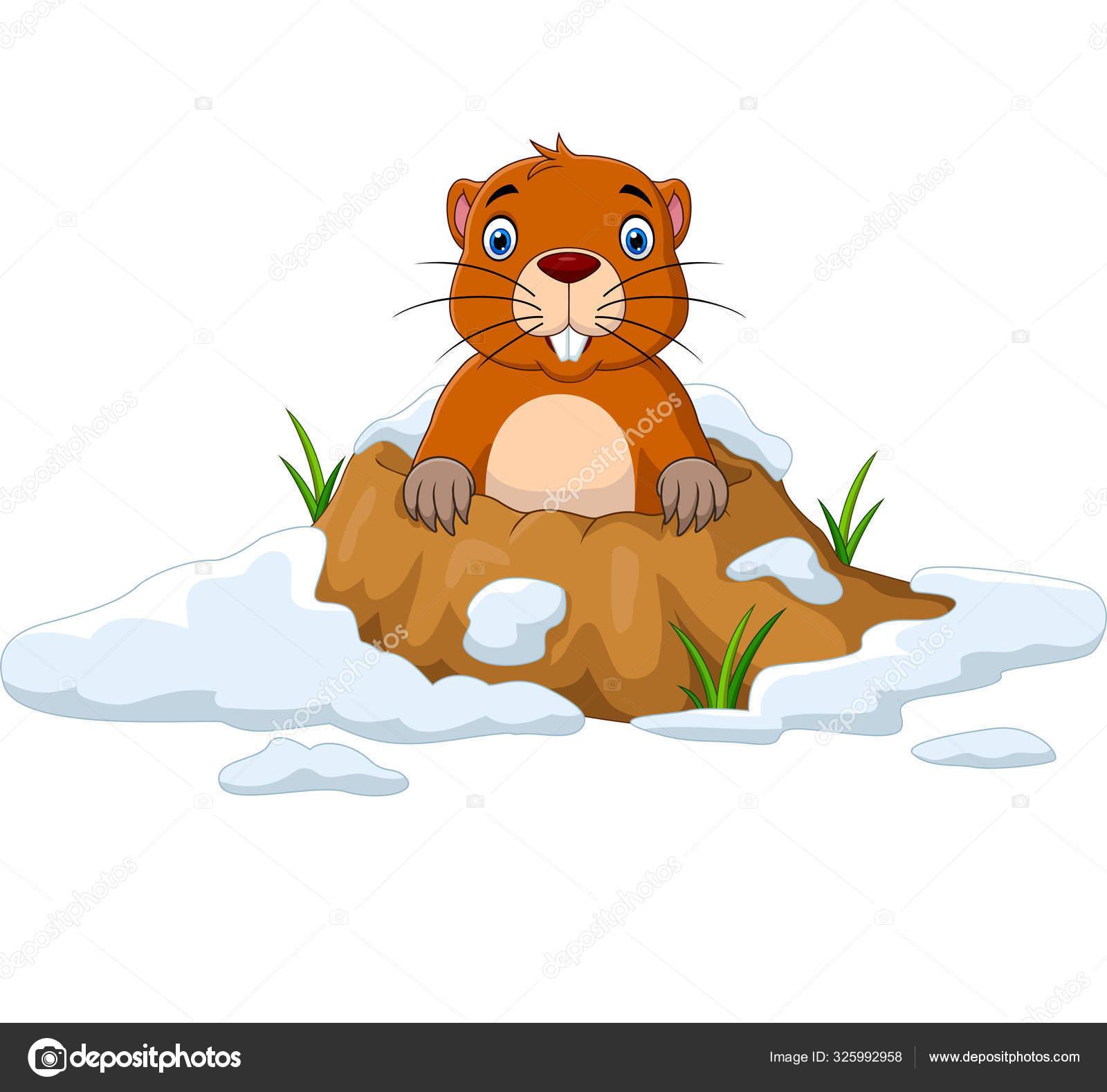 Illustration Vectorielle Marmotte Bande Dessinée Regardant ...