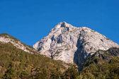 Hegyi vágás az osztrák Alpokban. A fehér-hegységre mások, benövik a fák körül.