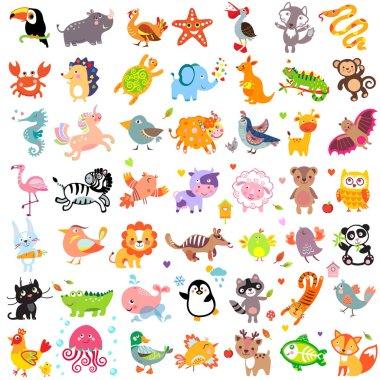 Animals Fifty Set