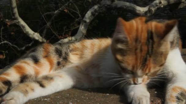 Kočka si olizuje peří. Kočka si čistí peří. kočka leží na slunci. Kočka z ulice. Zavřít