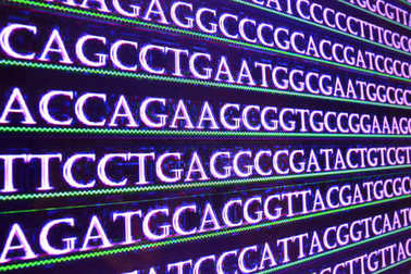 Sequencing the genome.