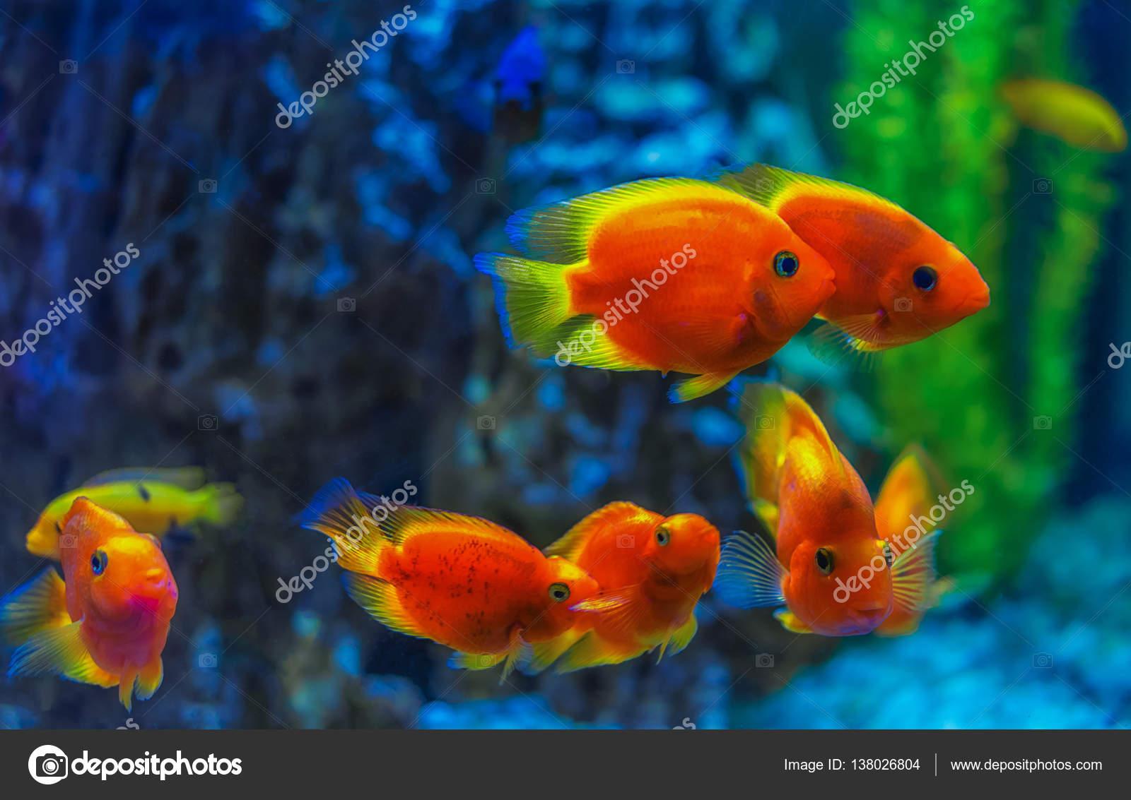 Peces rojos bajo el agua — Foto de Stock