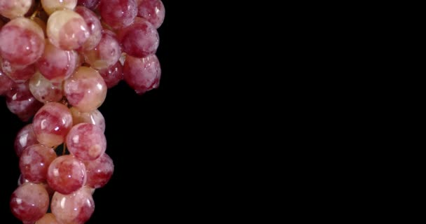 Bunch of ripe grapes with water drops.