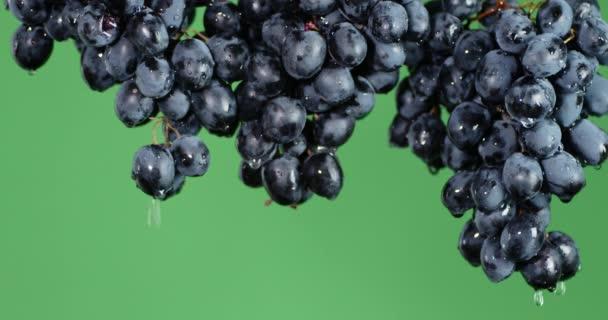 Érett szőlőfürtökkel csöpögő vízzel.