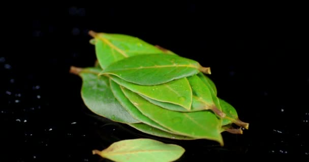 A bunch of Bay leaves rotates slowly.