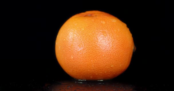 One whole grapefruit falling water drops.