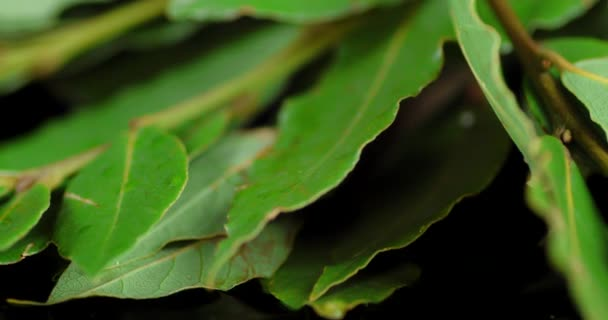 Fragrant Bay leaf rotates slowly.