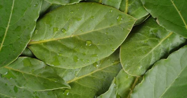 Bay leaf with water drops rotates slowly.