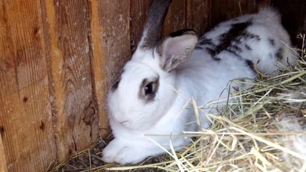 Rabbits in the rabbit hutch