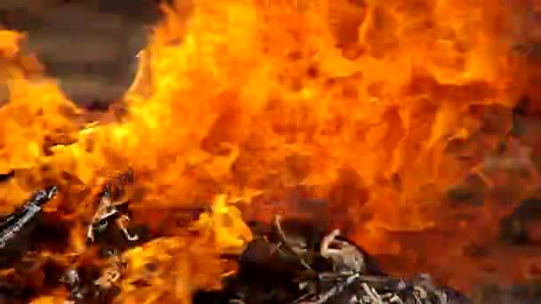 Zetel vat vuur vrouw aangetroffen in tuin lier gazet van