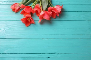 Spring tulips on wooden background