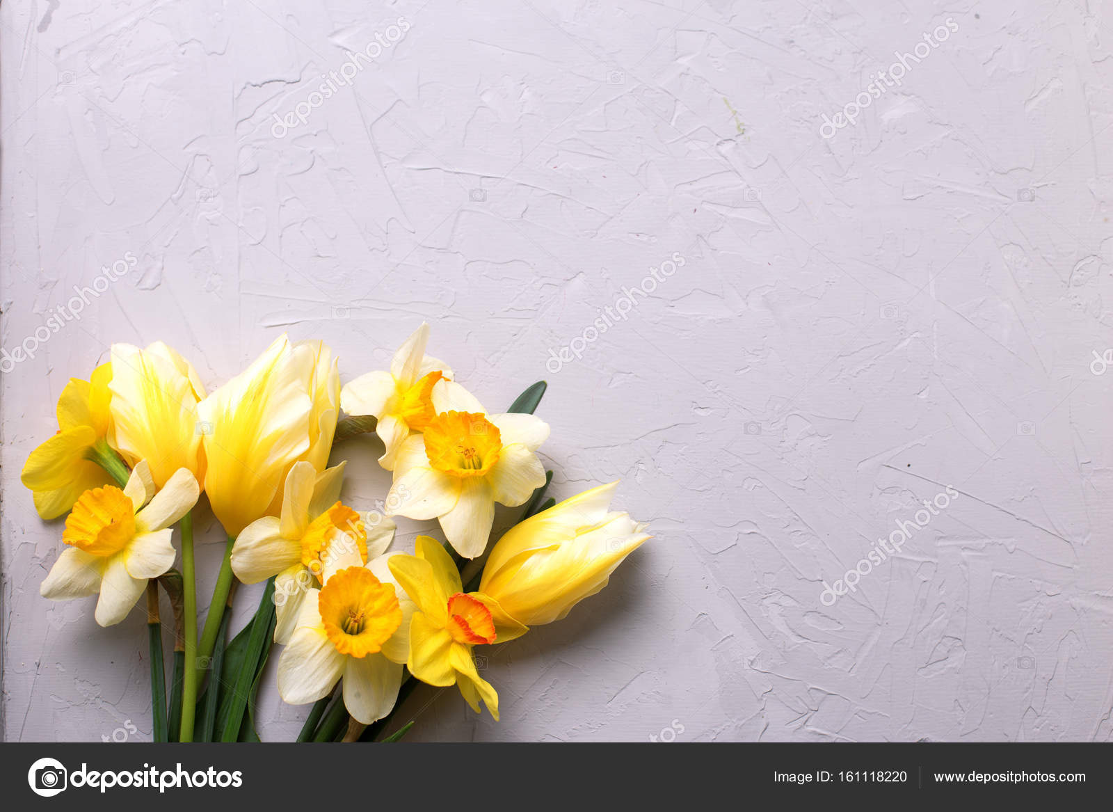 Yellow Narcissus And Tulips Flowers On Grey Background Stock