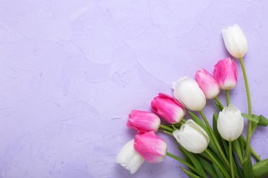 Pink and white tulips flowers on violet textured background. stock vector