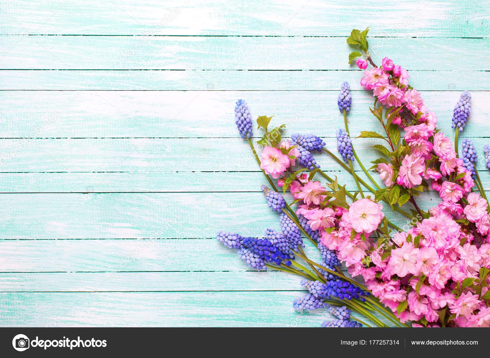 Background spring flowers pink almond blue muscaries flowers background spring flowers pink almond blue muscaries flowers turquoise wooden stock photo mightylinksfo Choice Image