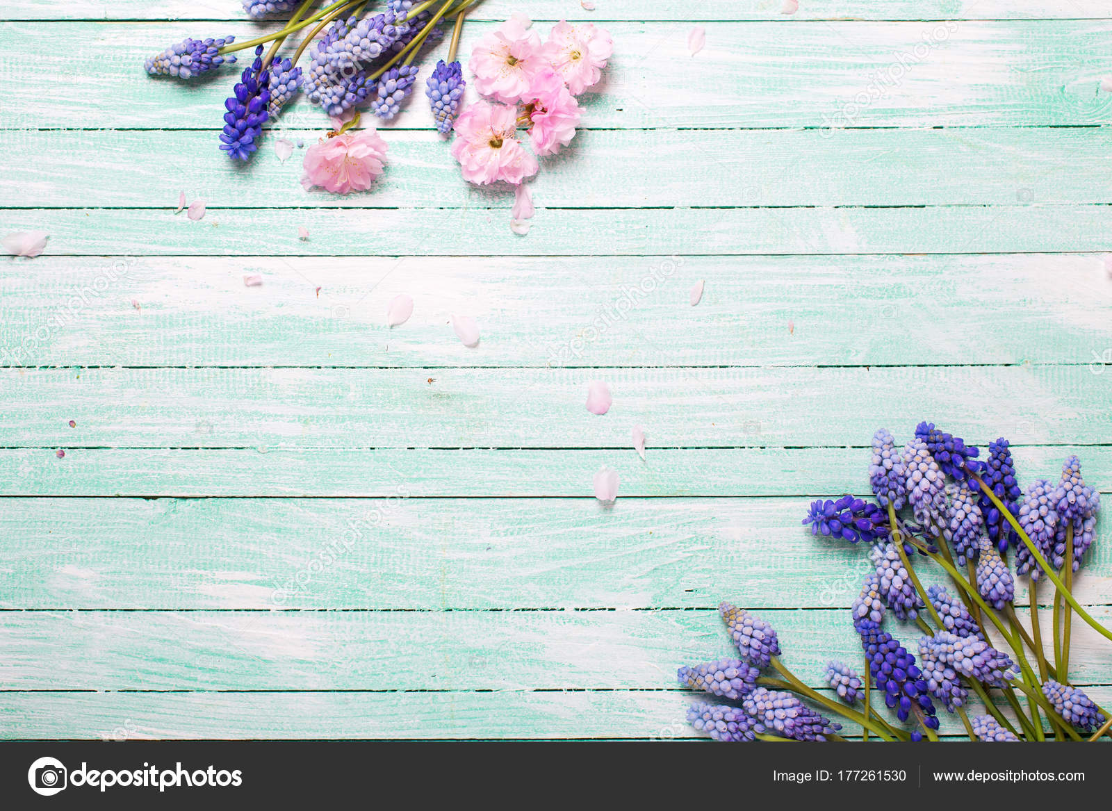 Background Spring Flowers Border Pink Almond Blue Muscaries
