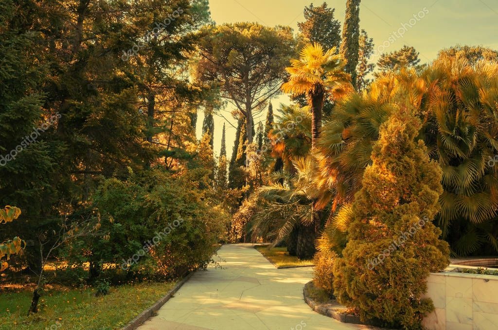 Park alley in the botanical garden of Sochi, Russia