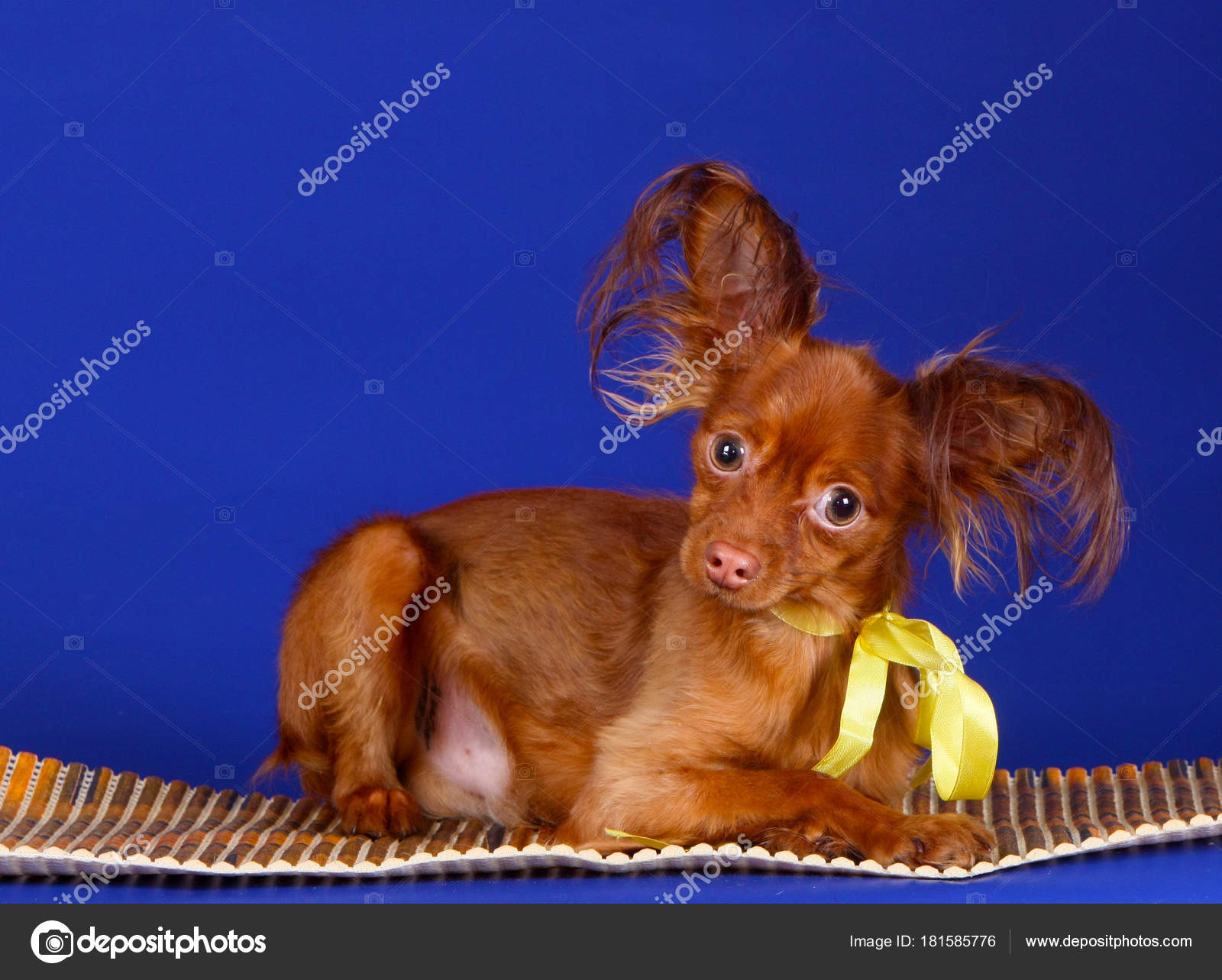 Top Puppies Bow Adorable Dog - depositphotos_181585776-stock-photo-portrait-red-haired-puppy-yellow  Snapshot_166640  .jpg