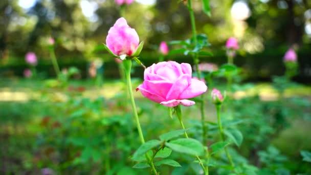 Krásná květina kymácející se v detailní zázemí v Indii.