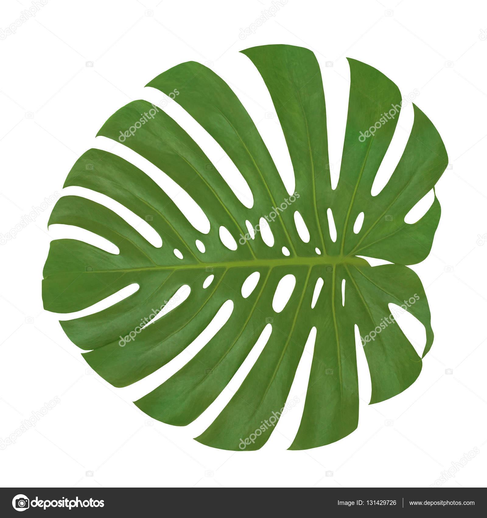 Feuille plante images download cv letter and format for Plante palmier