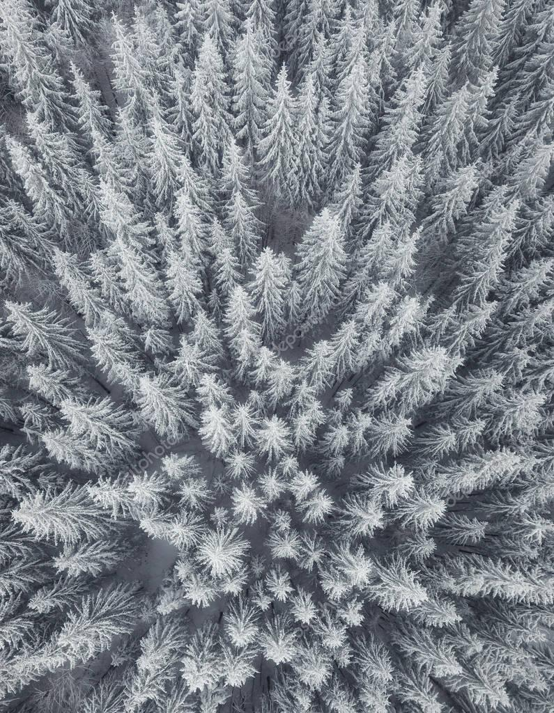 Winter landscape from air. Forest as a background