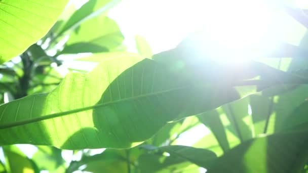 A zöld levelek sun