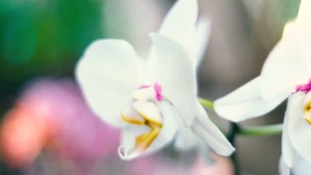 Detail květu orchideje v orchid garden