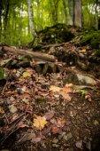 podzimní stromy v lese v horách nedaleko Soči