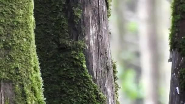Mechový stromy v lese